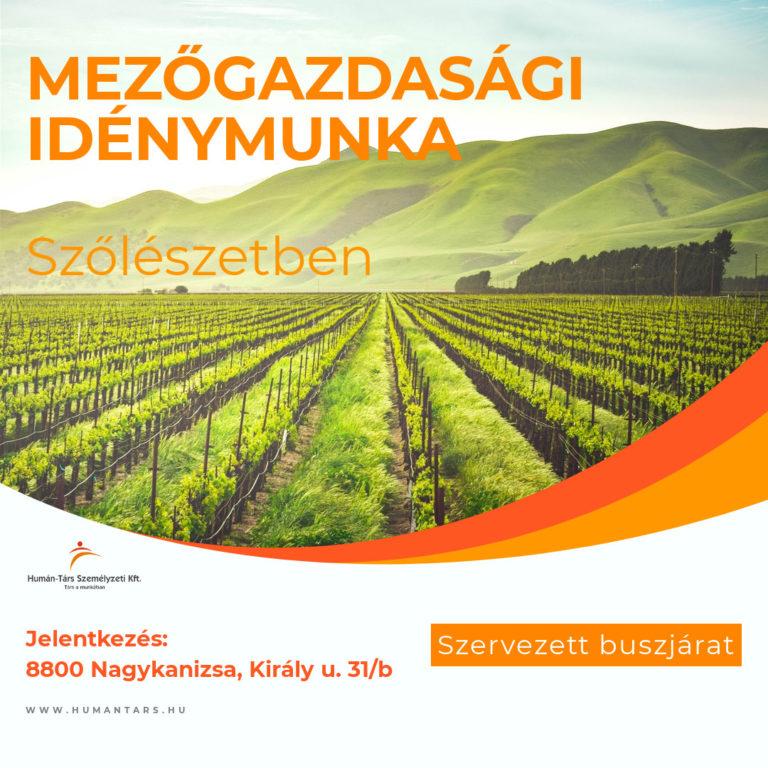 Mezőgazdasági idénymunka szőlészet - humántárs
